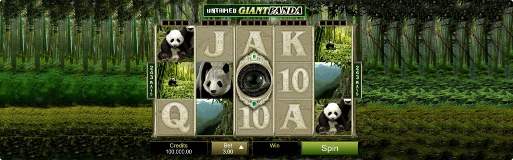 Giant Panda Slot free.